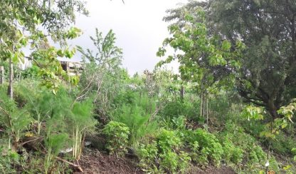 Kahikatea-Farm-food-forest