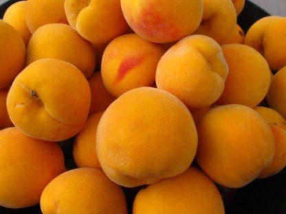 Golden Queen Peaches