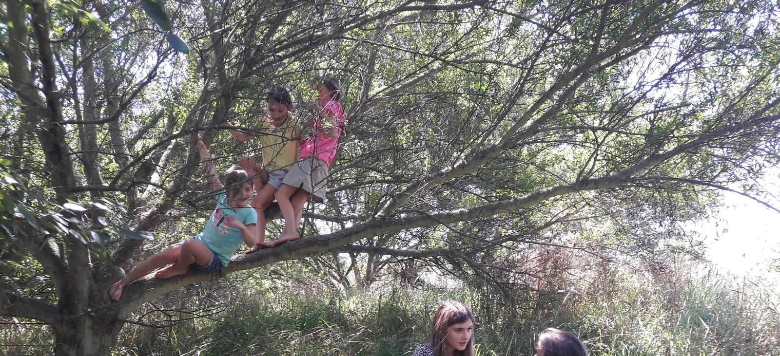 kahikatea-farm-food-forest-kids-in-tagasaste