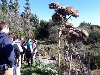 kahikatea-farm-food-forest-tour