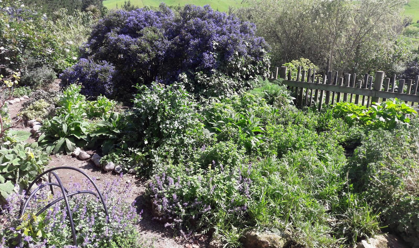 kahikatea-farm-herb-garden