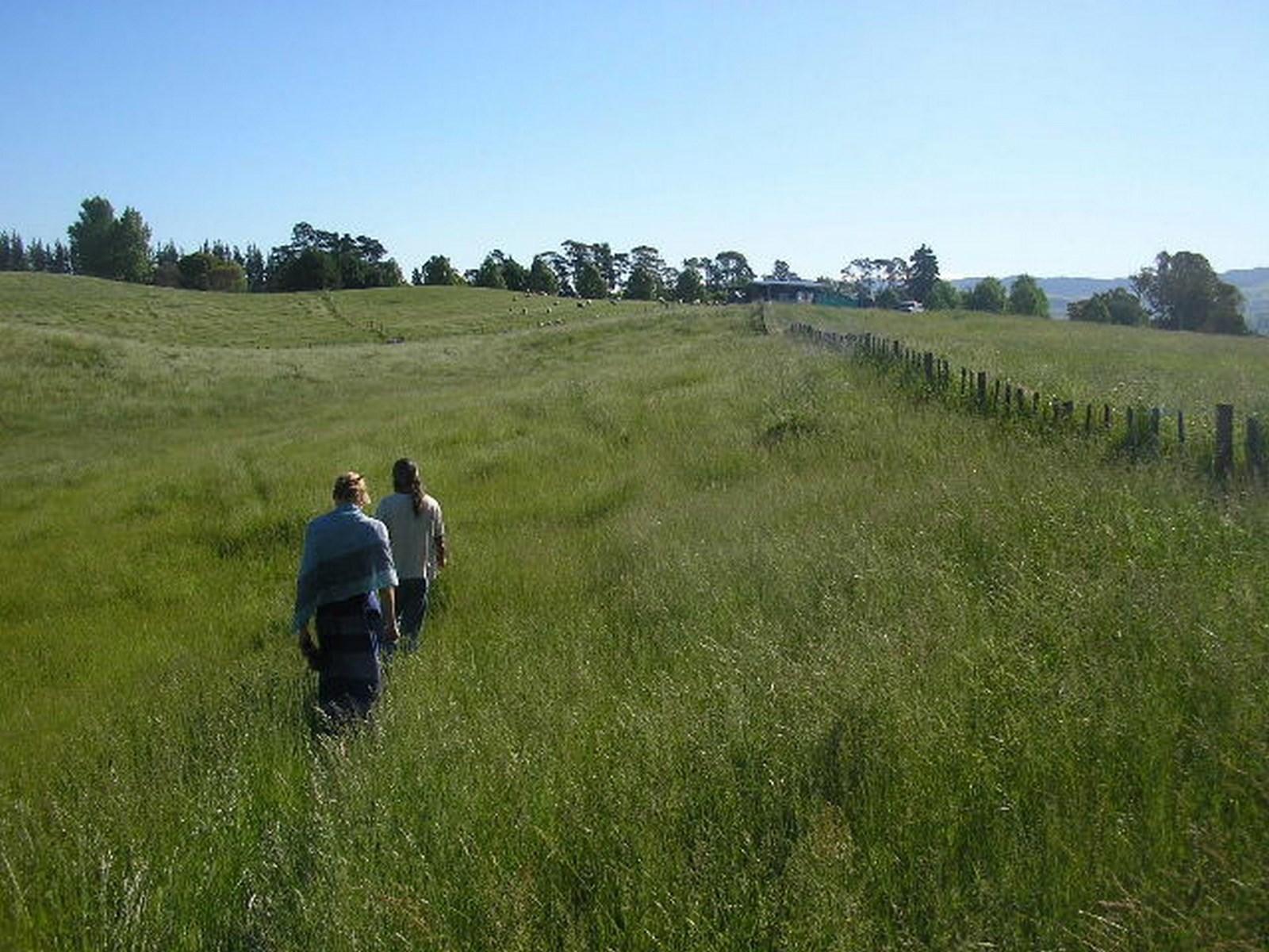 kahikatea-farm-middle-paddock-2005