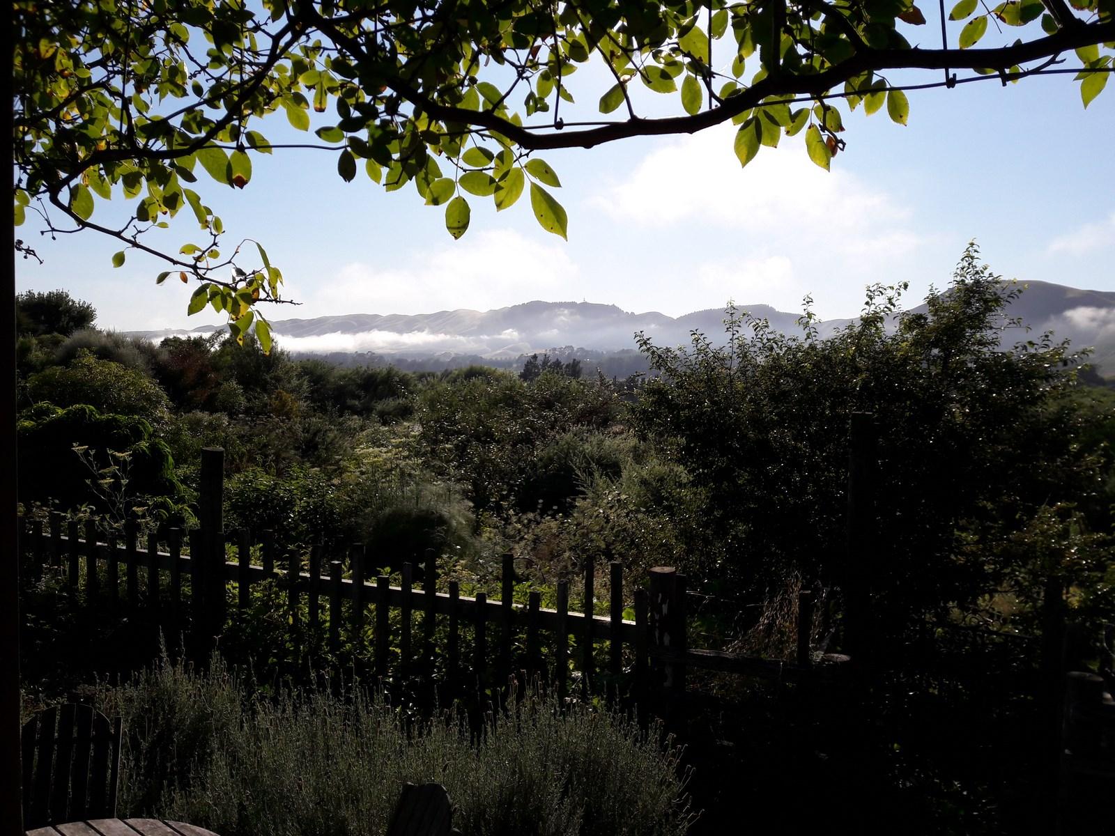 kahikatea-farm-misty-morning