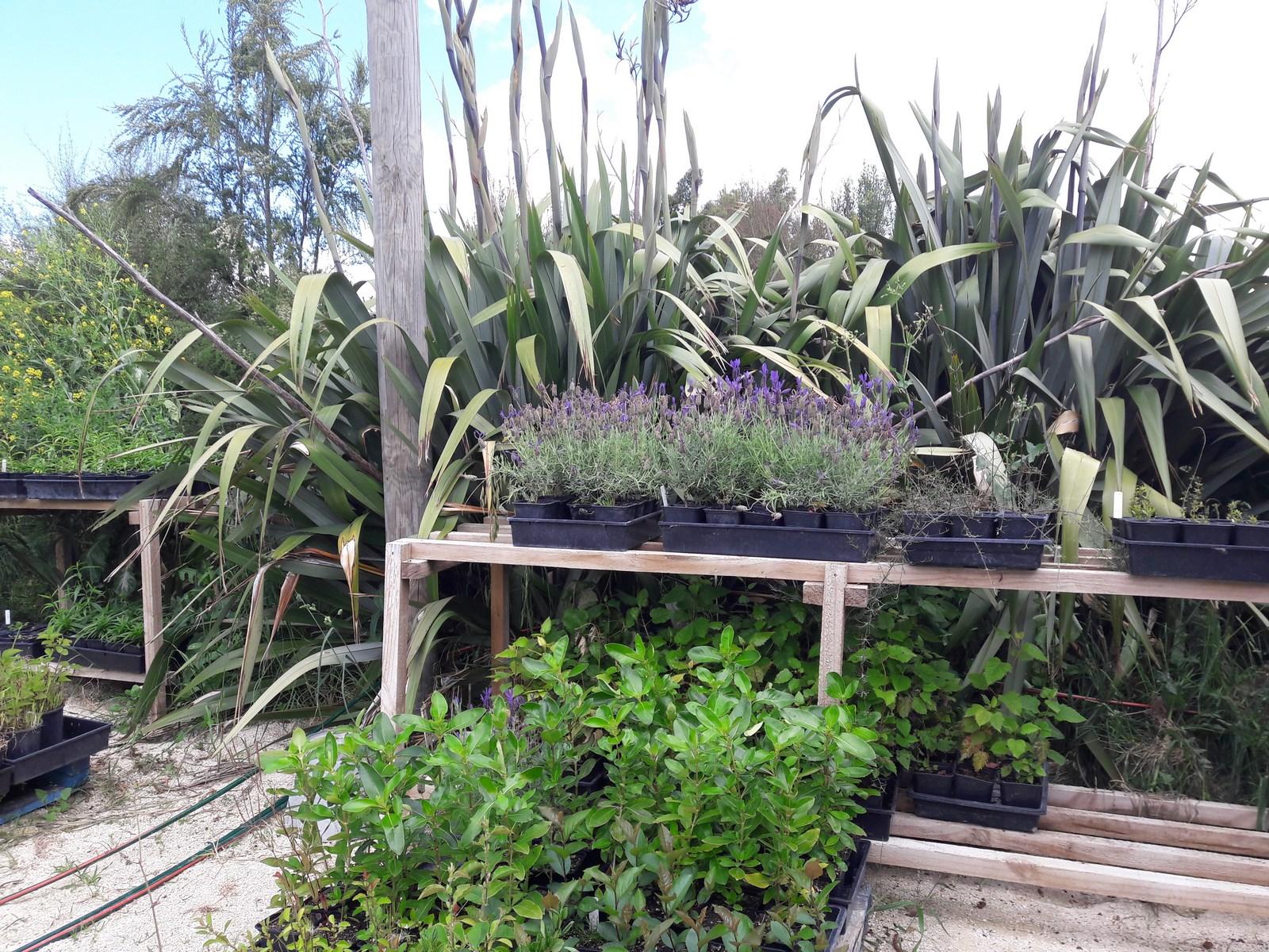 kahikatea-farm-nursery