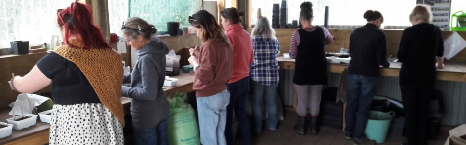 kahikatea-farm-seed-sowing-workshop