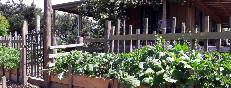 kahikatea-farm-terraced-permaculture-garden