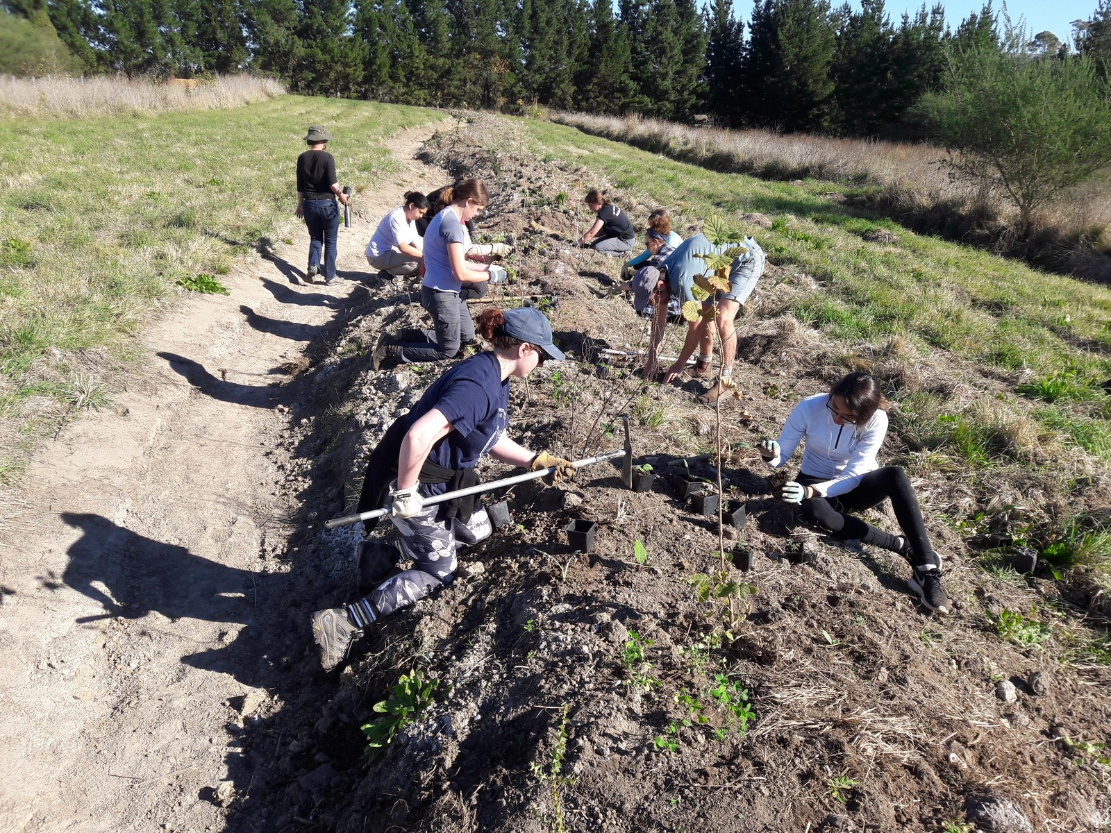 volunteering-at-kahikatea-farm