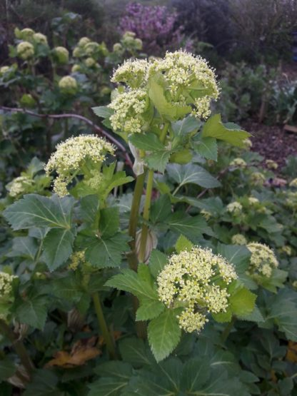 alexanders-flower-kahikatea-farm (3)