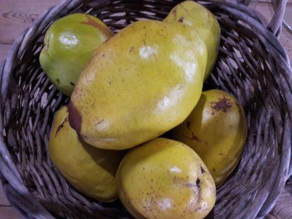 pseudocydonia-chinese-quince-fruit-kahikatea-farm