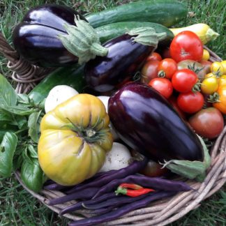 Kahikatea-Farm-start-your-own-edible-garden-workshop-abundant-vegetable-basket