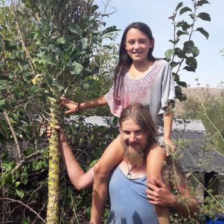 walking-stick-kale-kahikatea-farm-2.5-metres-tall